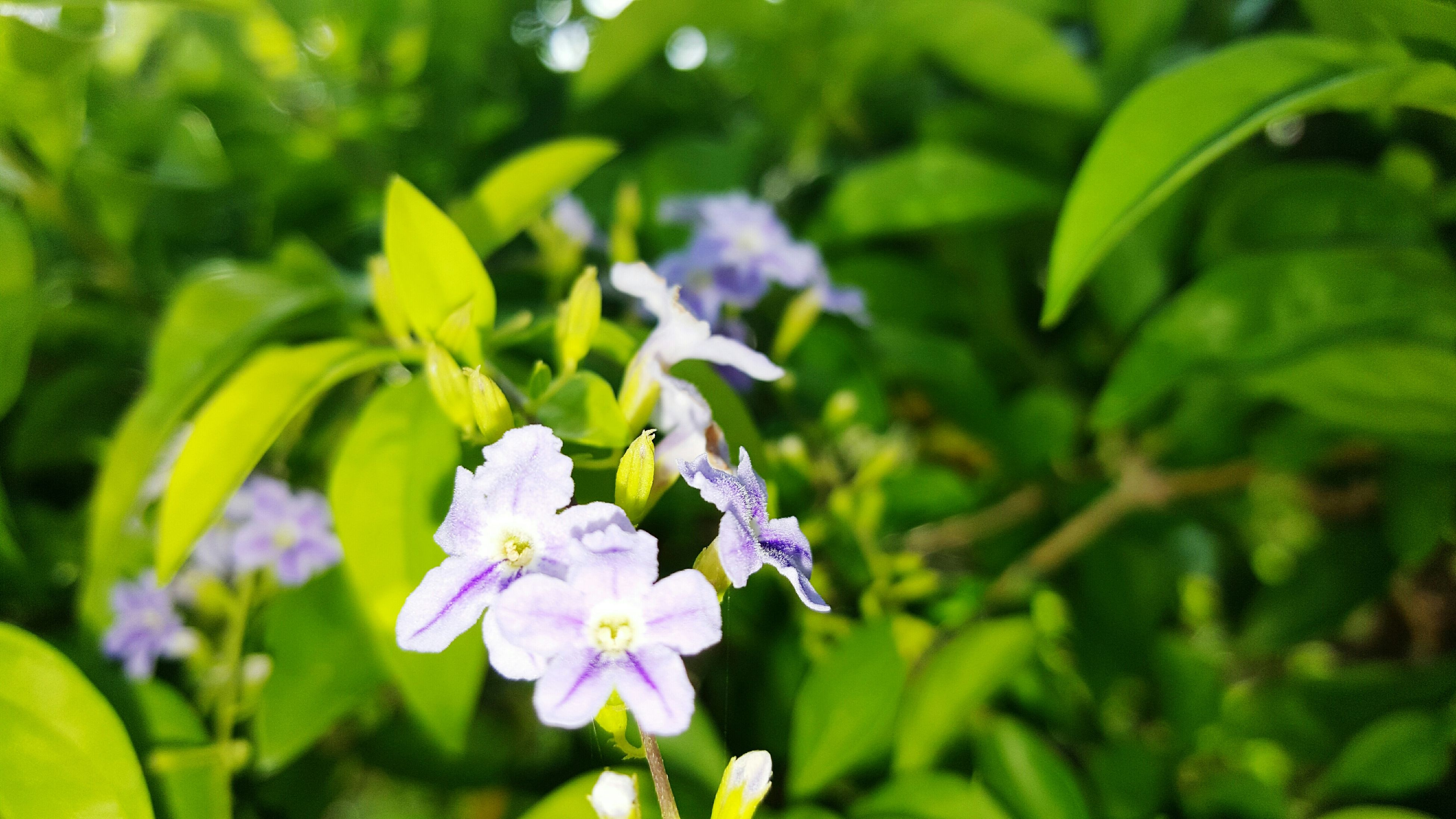 flower, freshness, fragility, petal, growth, flower head, beauty in nature, blooming, plant, focus on foreground, nature, close-up, purple, leaf, in bloom, green color, park - man made space, blossom, outdoors, yellow