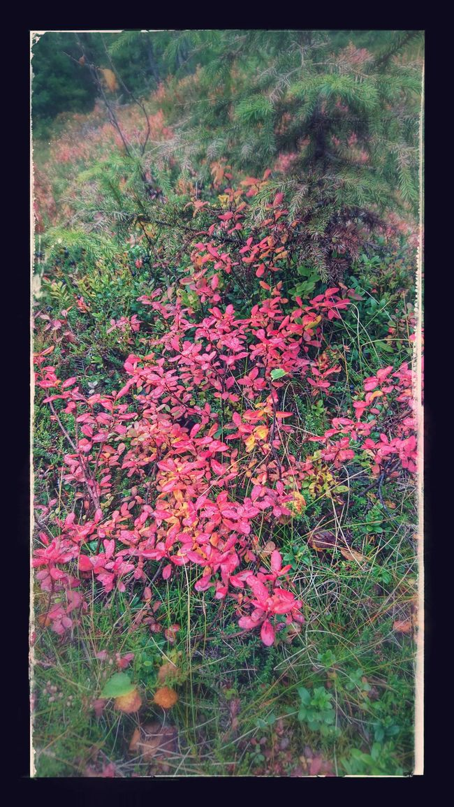 Fall Beauty Beauty In Nature Fall Colors Pink Color