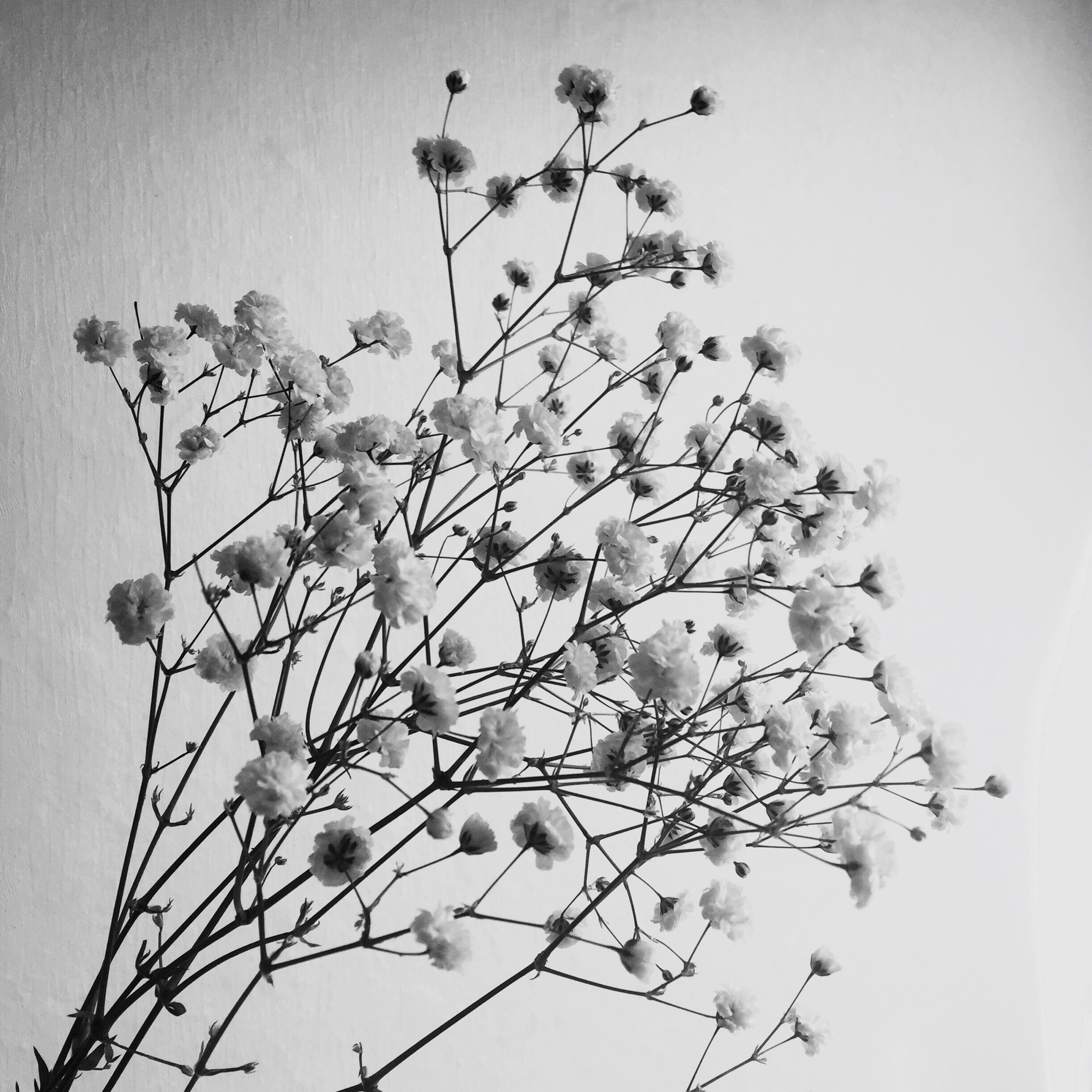 low angle view, growth, clear sky, flower, stem, nature, branch, plant, freshness, beauty in nature, fragility, copy space, twig, sky, leaf, no people, close-up, bud, day, outdoors