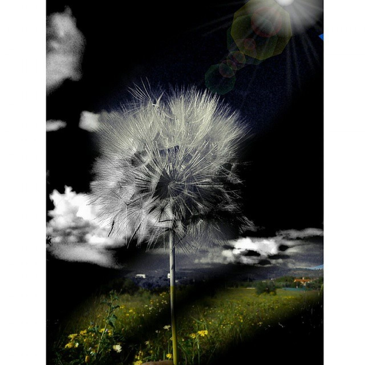 flower, dandelion, nature, growth, fragility, no people, plant, flower head, beauty in nature, outdoors, close-up, day, freshness