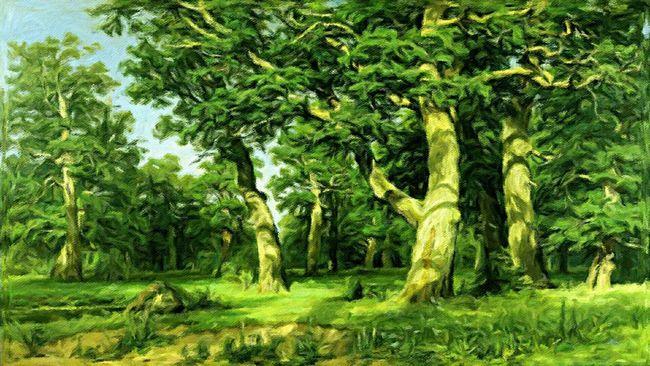 Sommertag im Waldgebiet bei Seesen . Oil on canvas 50 x 100 cm 2013 Art Painting Oilcolour Nature Romantic Forest Trees Landscape Summer ☀ Sky