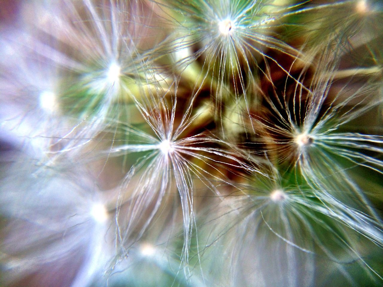 dandelion, dandelion seed, flower, softness, full frame, fragility, close-up, selective focus, no people, freshness, nature, growth, backgrounds, flower head, outdoors, day, beauty in nature