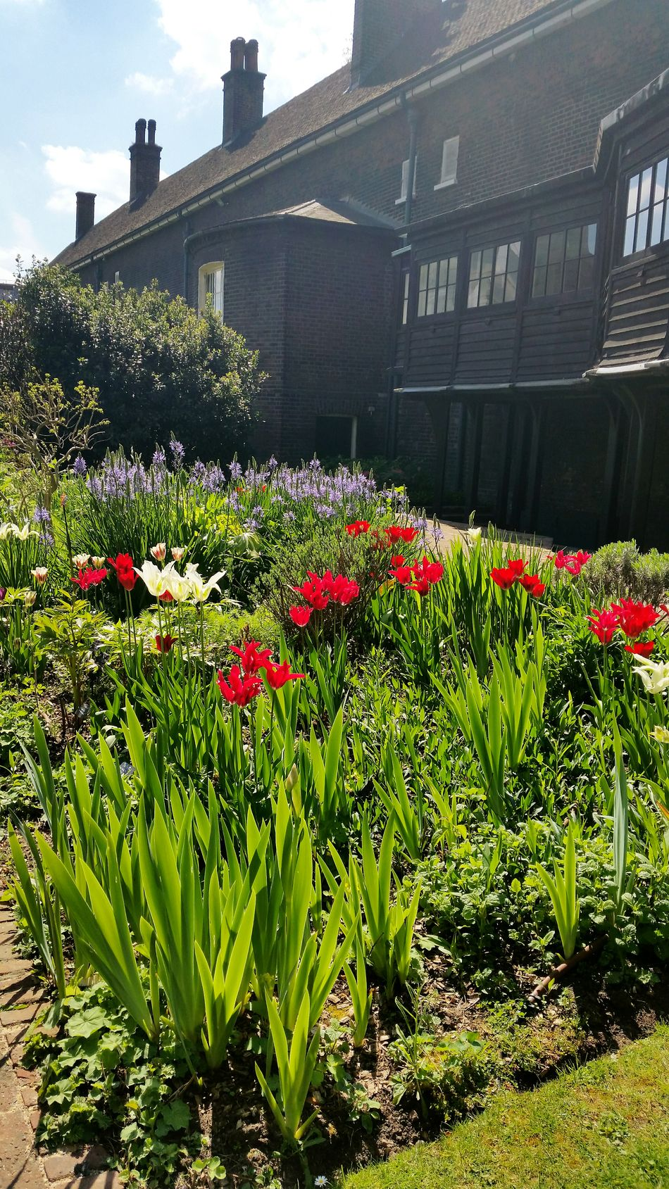 Flower Head Freshness Beauty In Nature Flowerbed Sunlight No People Building Exterior Growth Outdoors Day Plant Built Structure Architecture Flower Nature Geffrye Museum London Museum Hoxton East London Uk Colours Springtime
