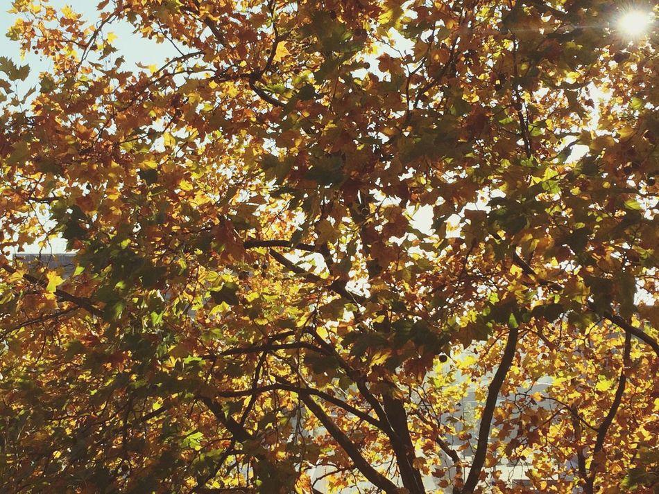 City, Herbst, Aachen