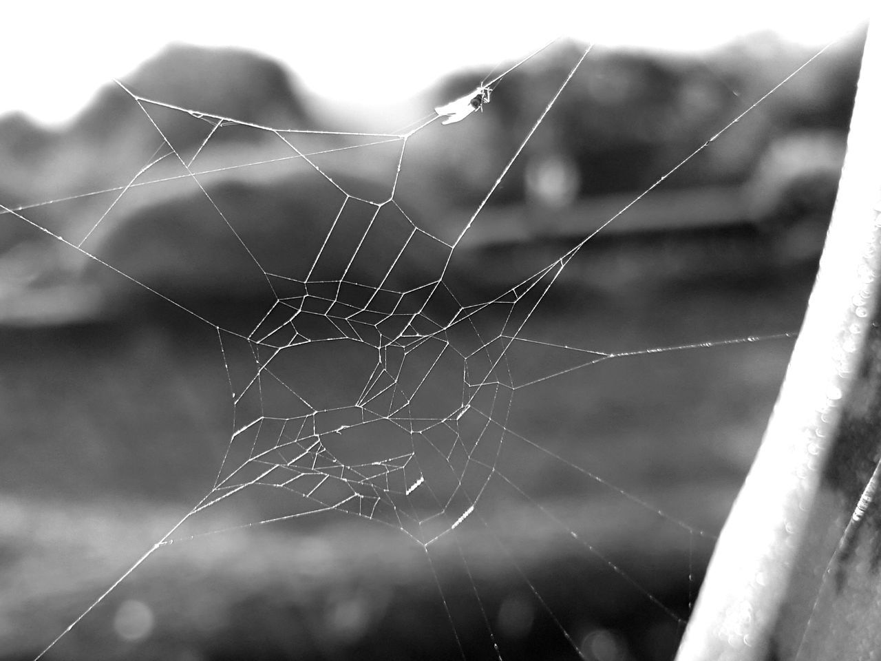 Spider Web Close-up Fragility Web Trapped Nature Black And White Black And White Photography Spiderweb Spiderweb Black And White Africa Spiderweb Kenya