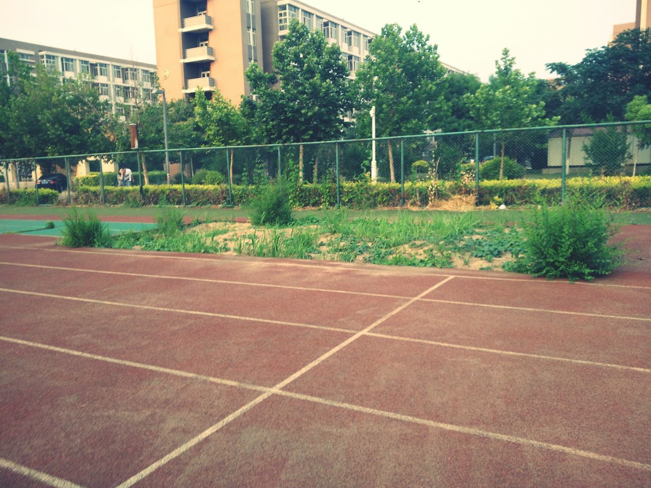 sport, tree, no people, court, challenge, day, outdoors, architecture, sky