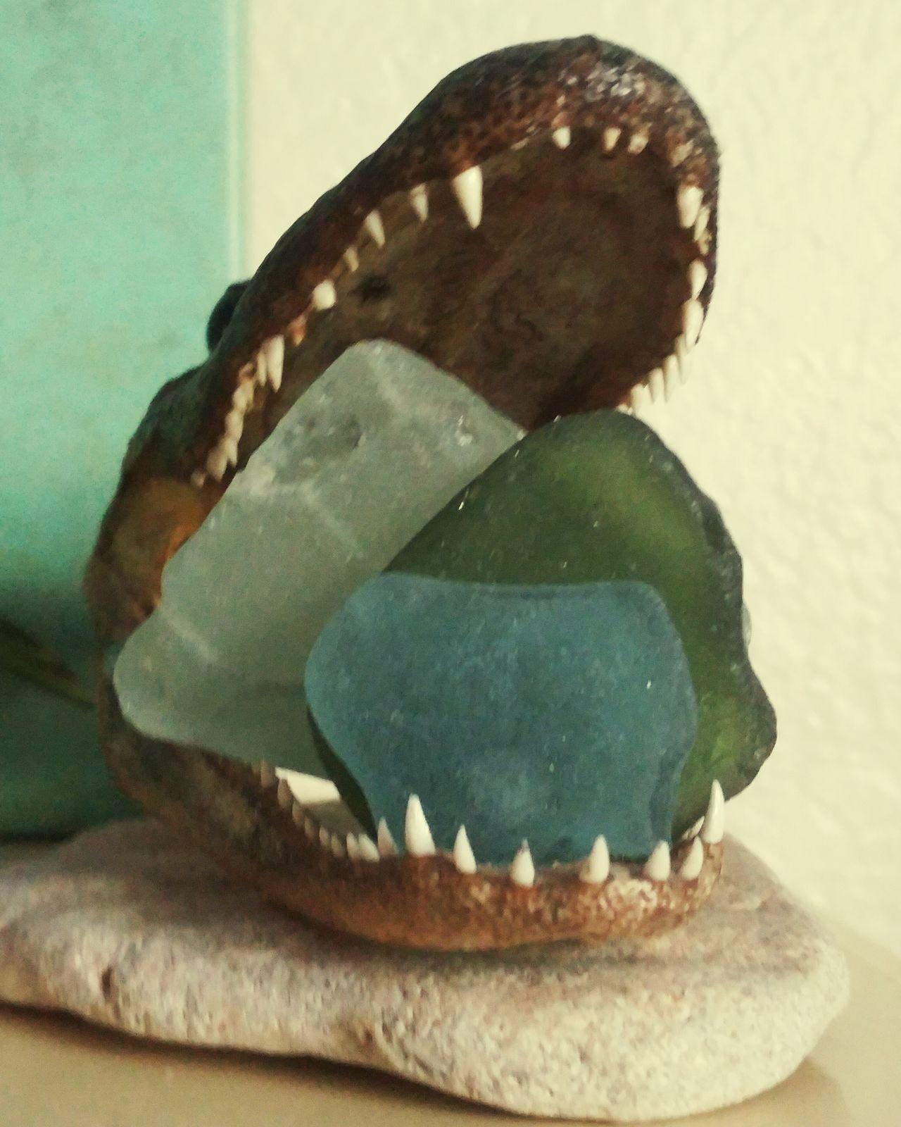 Gator Glass Eater Sea Glass Gator Allagator Gators Gator Glass