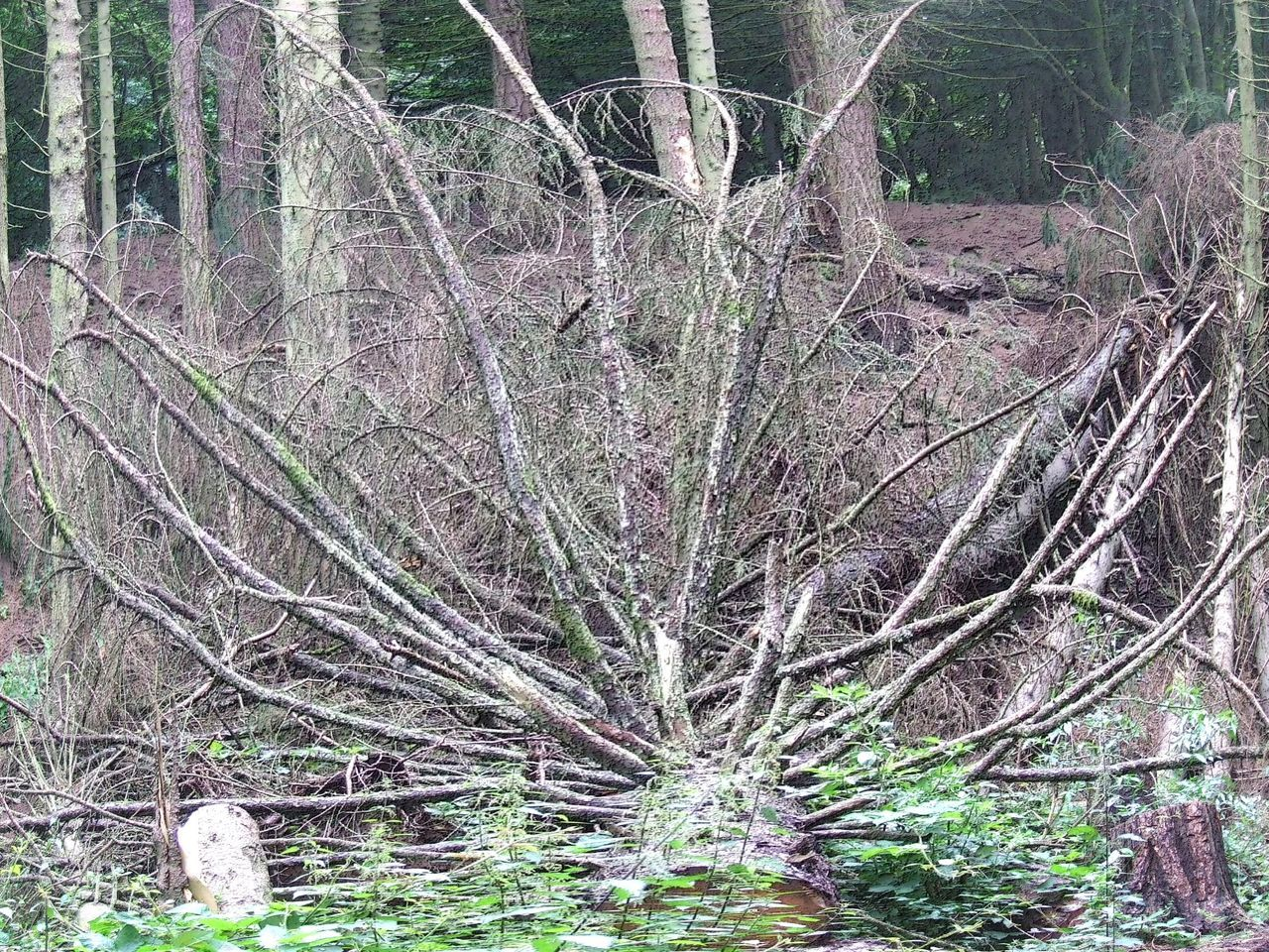 Branch Fallen Tree Forest Photography Nature No People Outdoors Tree Woodlands