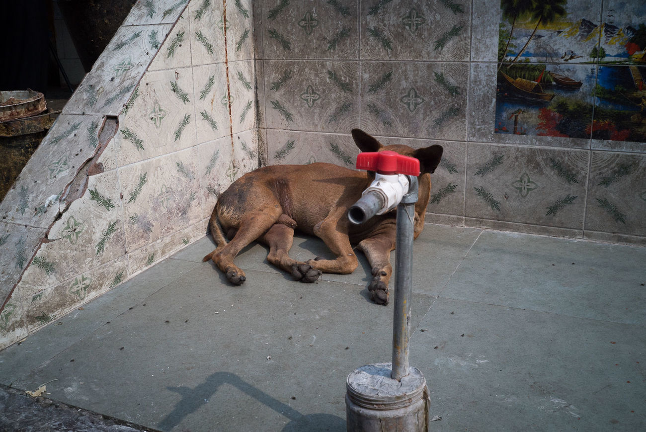 Animal Themes Day Dog Domestic Animals Mammal No People One Animal Outdoors Pets Streetphotography The Street Photographer - 2017 EyeEm Awards