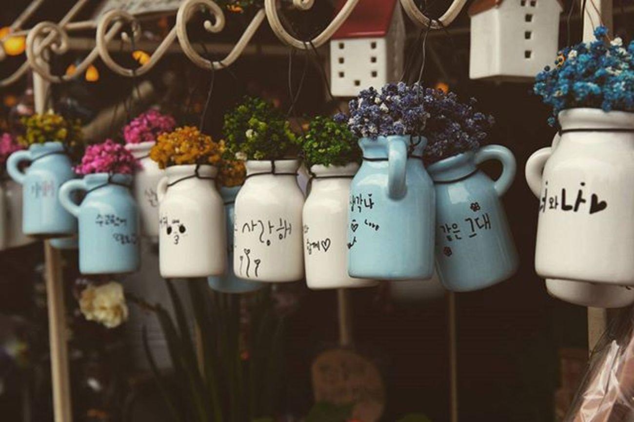 Bottoms Cute Colors Plant Lovely Likeforlike Instagood Photograph Photooftheday Korea Seoul