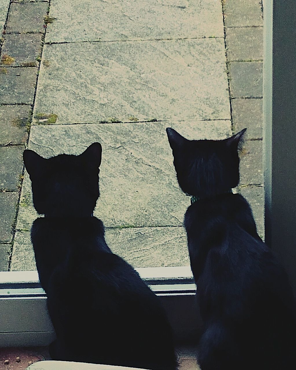 pets, domestic animals, animal themes, black color, sitting, mammal, no people, dog, day, domestic cat, togetherness, outdoors, close-up