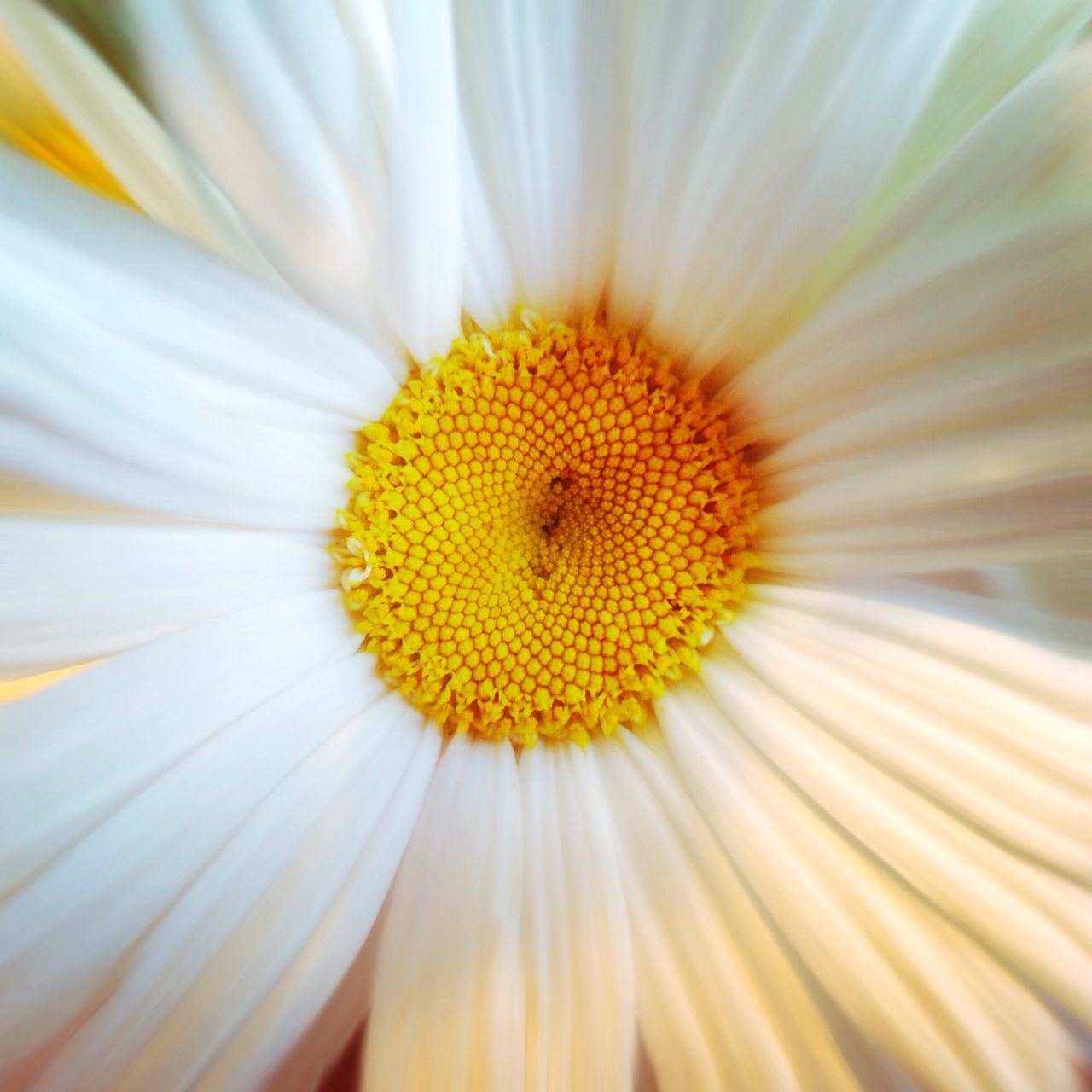 flower, fragility, petal, beauty in nature, pollen, nature, freshness, flower head, yellow, close-up, no people, growth, day, outdoors, animal themes