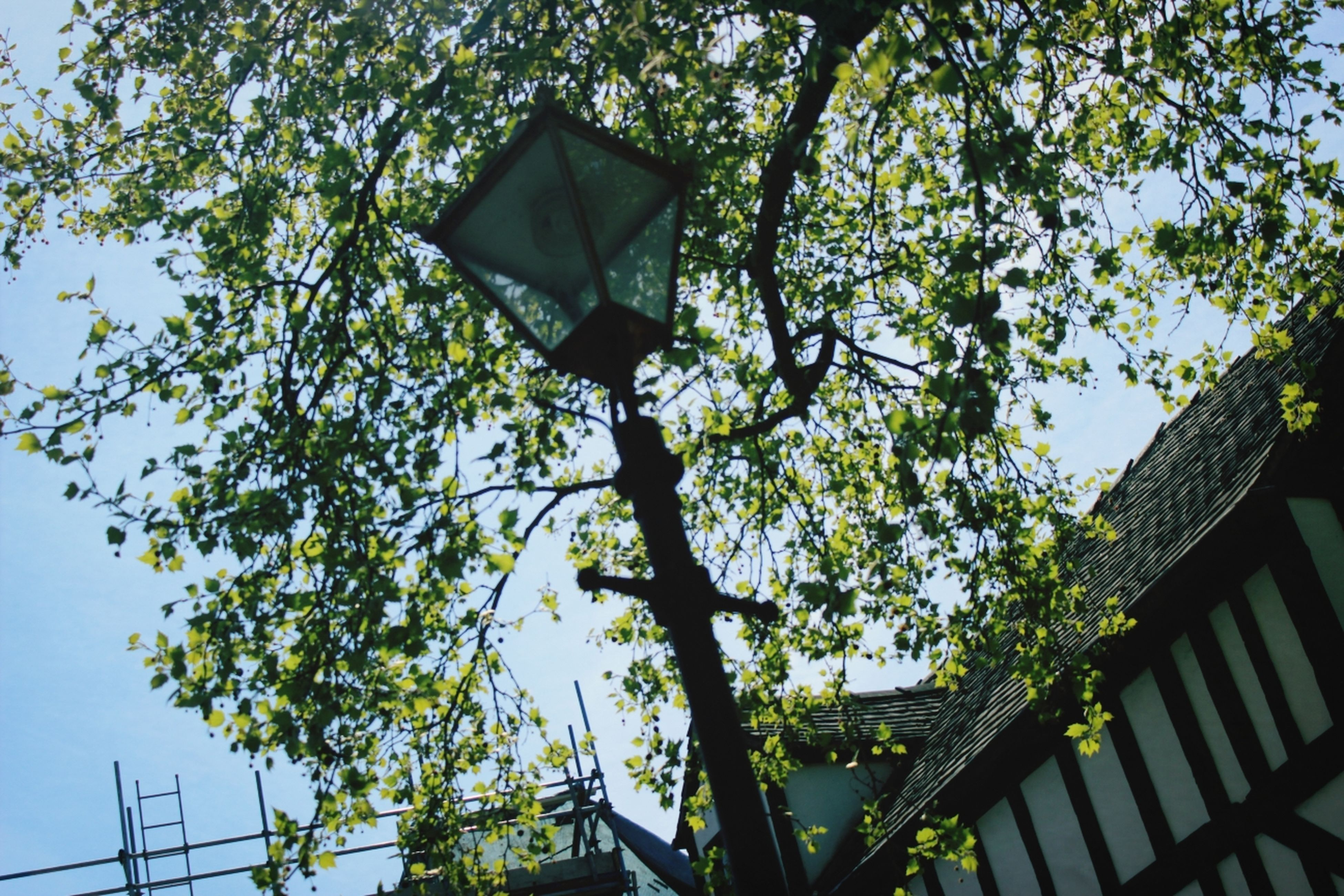 low angle view, tree, building exterior, built structure, architecture, branch, growth, clear sky, street light, lighting equipment, sky, house, day, outdoors, no people, high section, residential building, nature, hanging, building