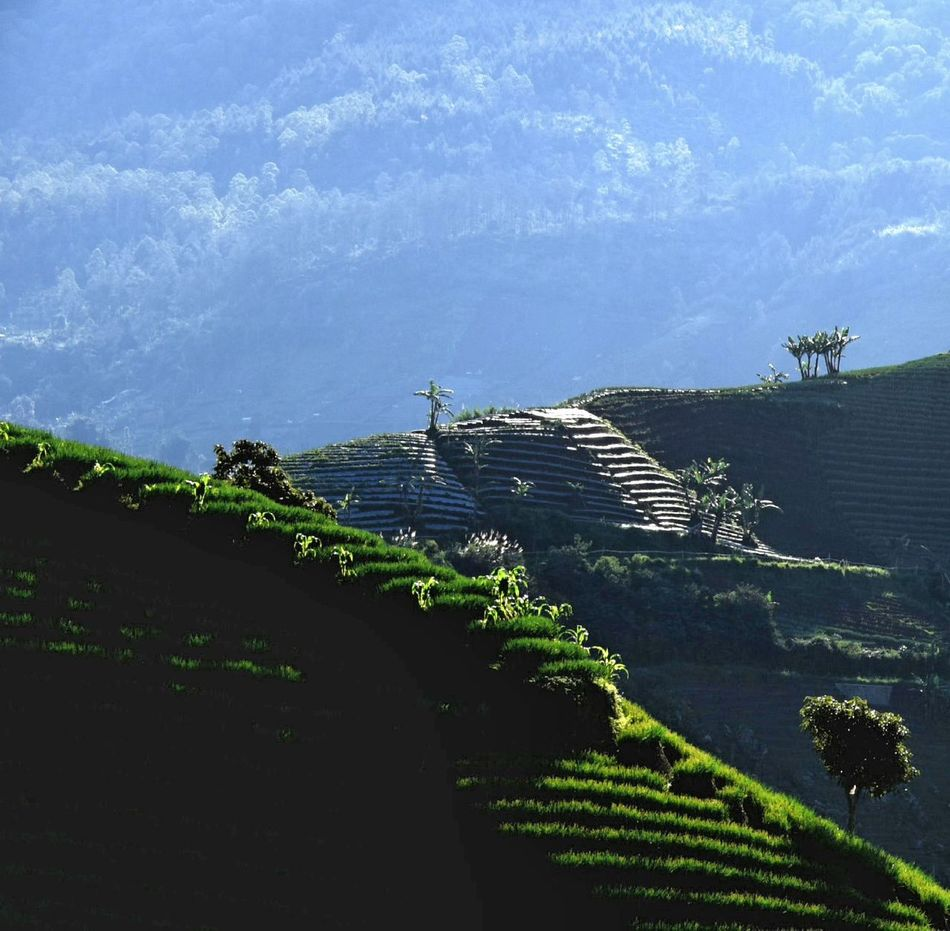 Nature Scenics Beauty In Nature Landscape Green Color Mountain View Majalengka