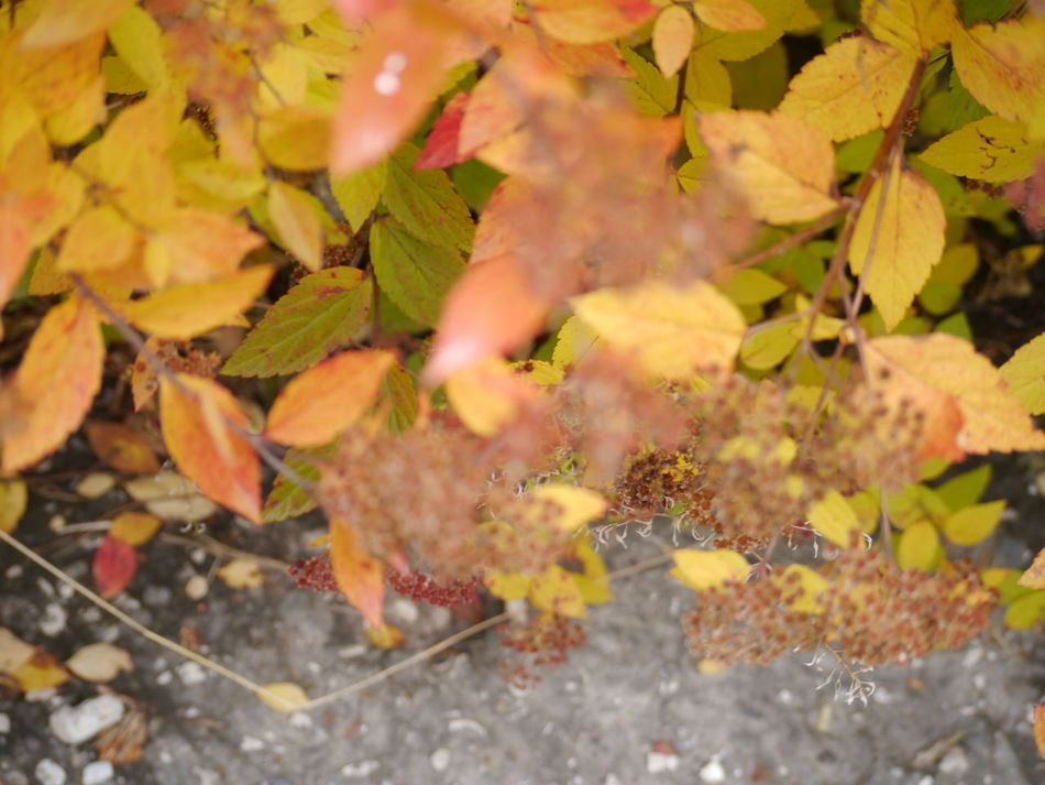 Autumn Autumn Colors Autumn Leaves Close-up Day Dry Leaves Nature No People Outdoors