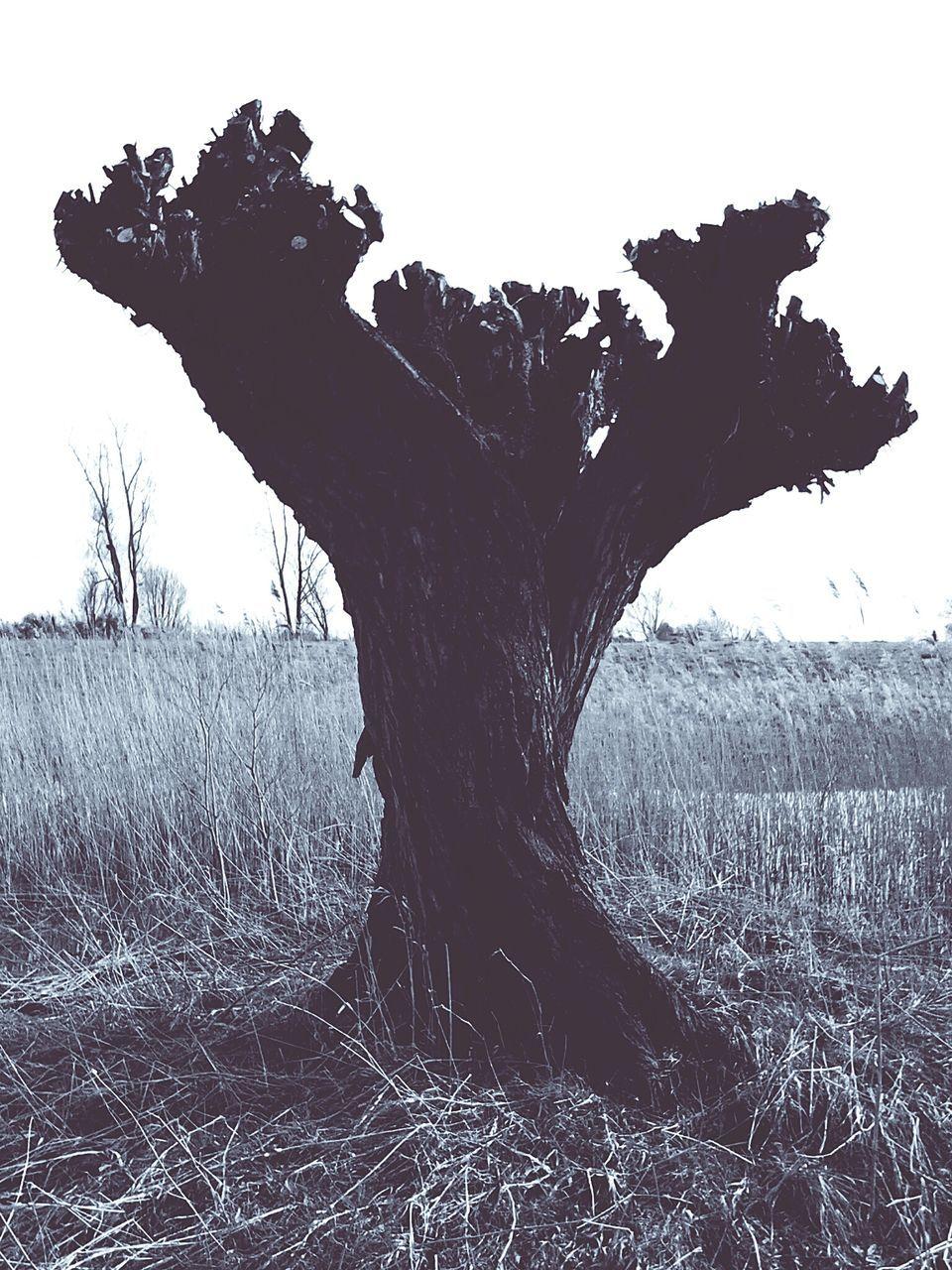 Silhouette Of Tree Stump On Field