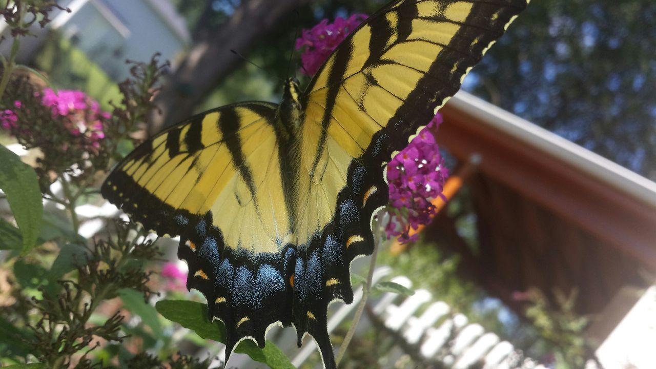 Nofilter EyeEm Nature Lover Garden BeautyofGodscreation