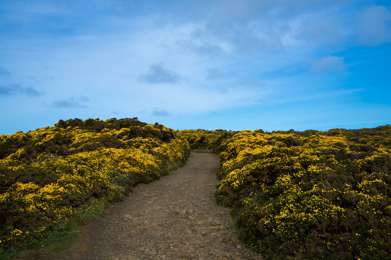 Beauty In Nature Cloud - Sky Day Giant's Causeway GiantsCauseway Growth Landscape Nature No People Northern Ireland Northernireland Outdoors Plant Scenics Sky The Way Forward Tranquil Scene Tranquility Tree Yellow Yellow Flower
