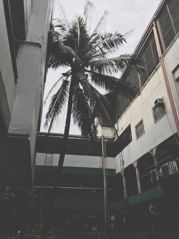 The sky is your limit ✨ Palm Tree Tree Building Exterior Built Structure Outdoors Architecture Low Angle View Day No People Sky