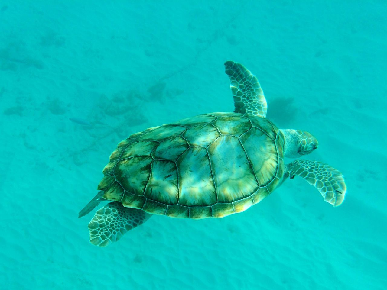 Beautiful stock photos of turtle, Animal Themes, Animal Wildlife, Animals In The Wild, Beauty In Nature