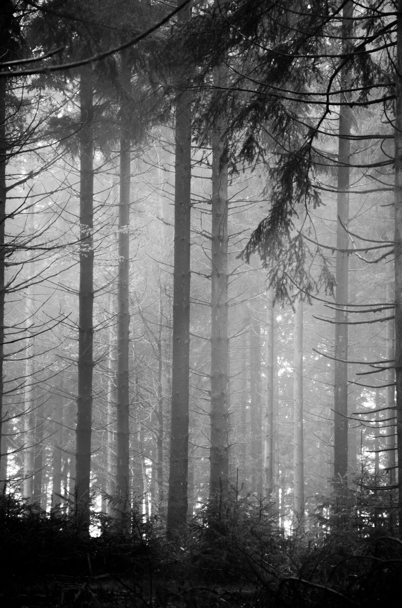 Landscape Blackandwhite Fog Forest Nature Trees Light Morvan Taking Photos Getting Inspired
