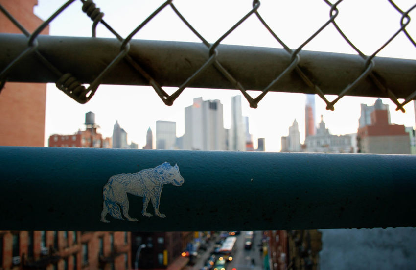 Chainlink Fence City Culture Focus On Foreground Metal Outdoors Skyline Wolf