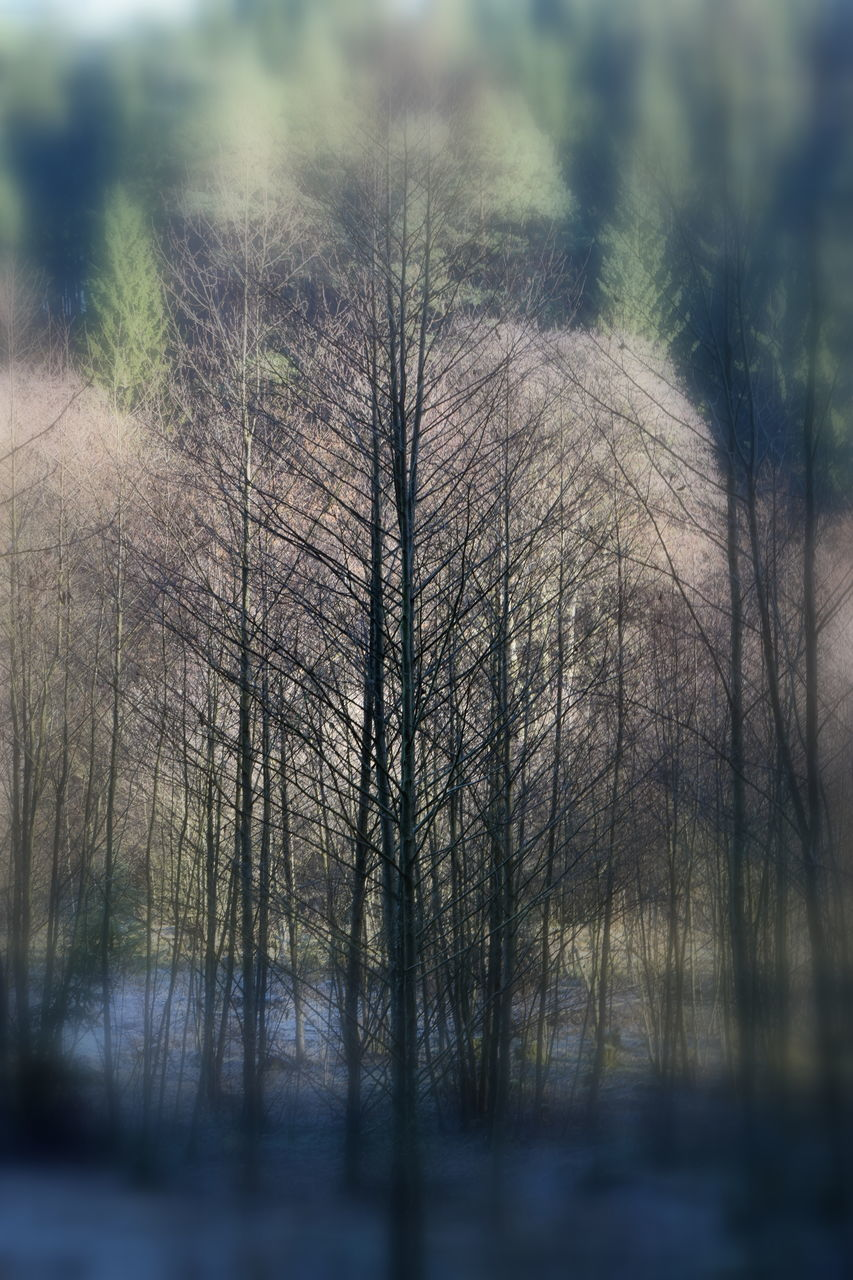 tree, bare tree, tranquility, nature, beauty in nature, branch, no people, day, outdoors, scenics, close-up