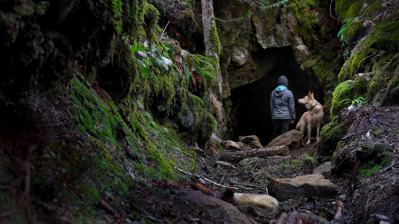 Adult Adults Only Adventure Beauty In Nature Cave Cinematic Composition Courage Dog Exploring Forest Full Length Gripping Hiking Lifestyles Lush Foliage Nature One Person One Woman Only Outdoors People Rock - Object Scary Trekking Young Woman