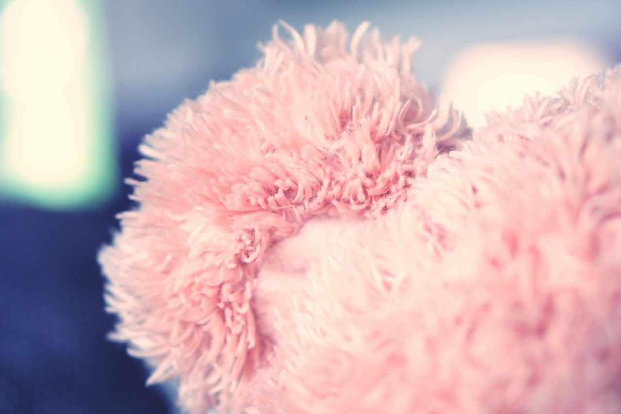 Close-up Selective Focus Freshness Fragility Beauty In Nature Flower Macro Nature Growth Focus On Foreground Day Softness Flower Head Blossom Extreme Close Up Botany Bloom In Bloom Springtime No People Teddy Teddybär Teddy Bear Teddylove Ear