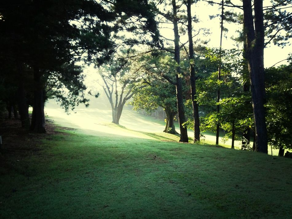 Campo de golf n5 Relaxing Light And Shadow Morning
