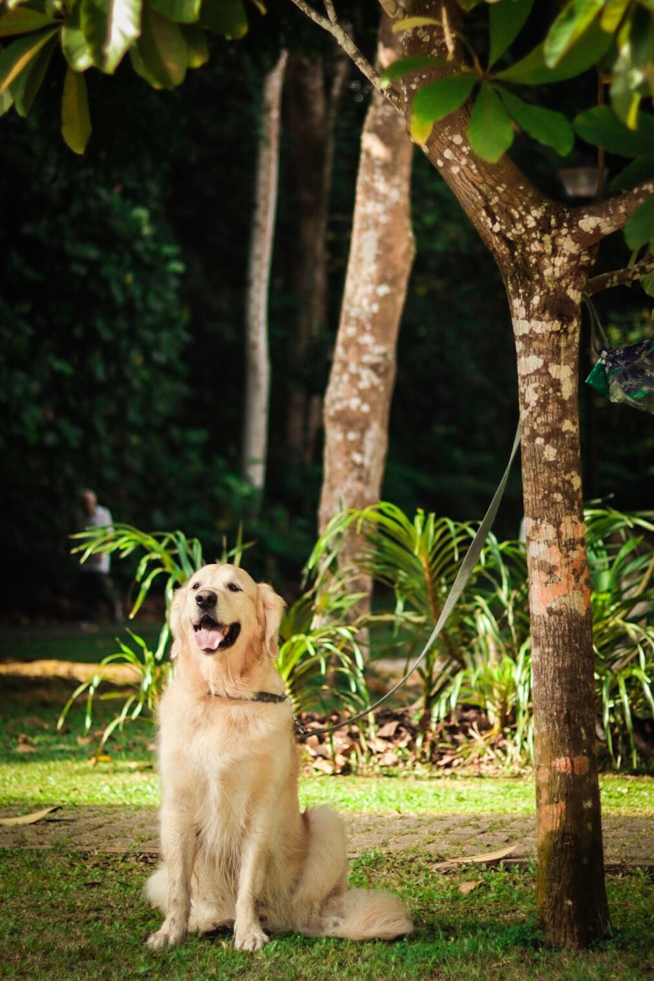 Dogs love the shade too One Animal Dog Pets Tree Animal Themes Domestic Animals Lush Foliage Animal Mammal No People Plant Outdoors Yawning Day Pet Equipment Grass Nature