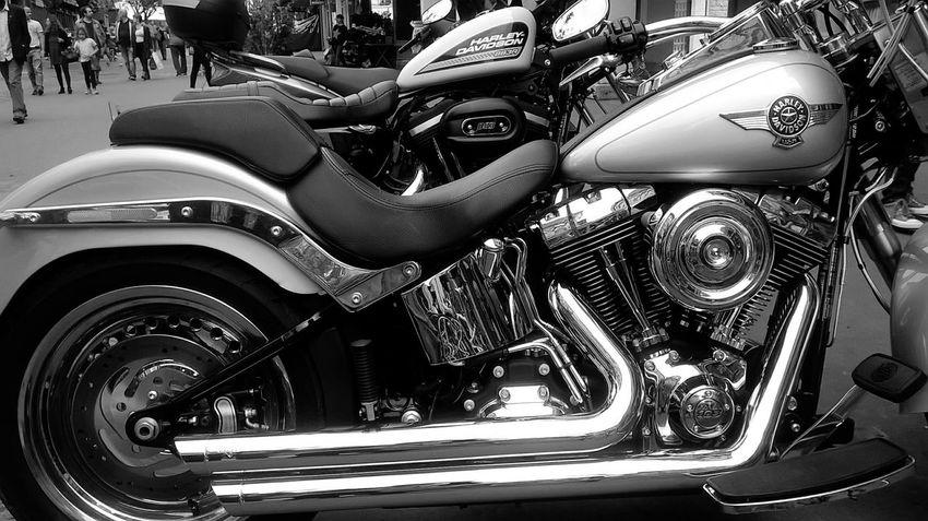 Hummmm Harley !