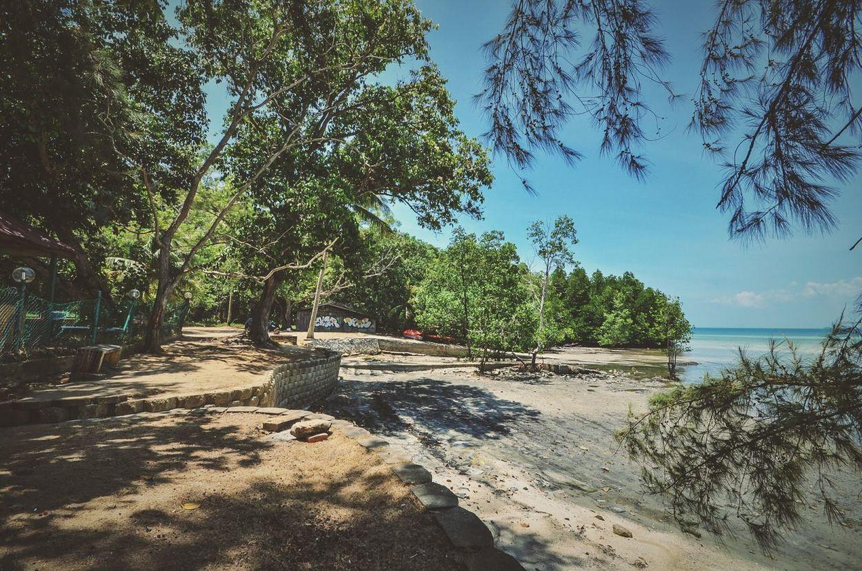 Landscape Beach Tree Port Dickson Malaysia