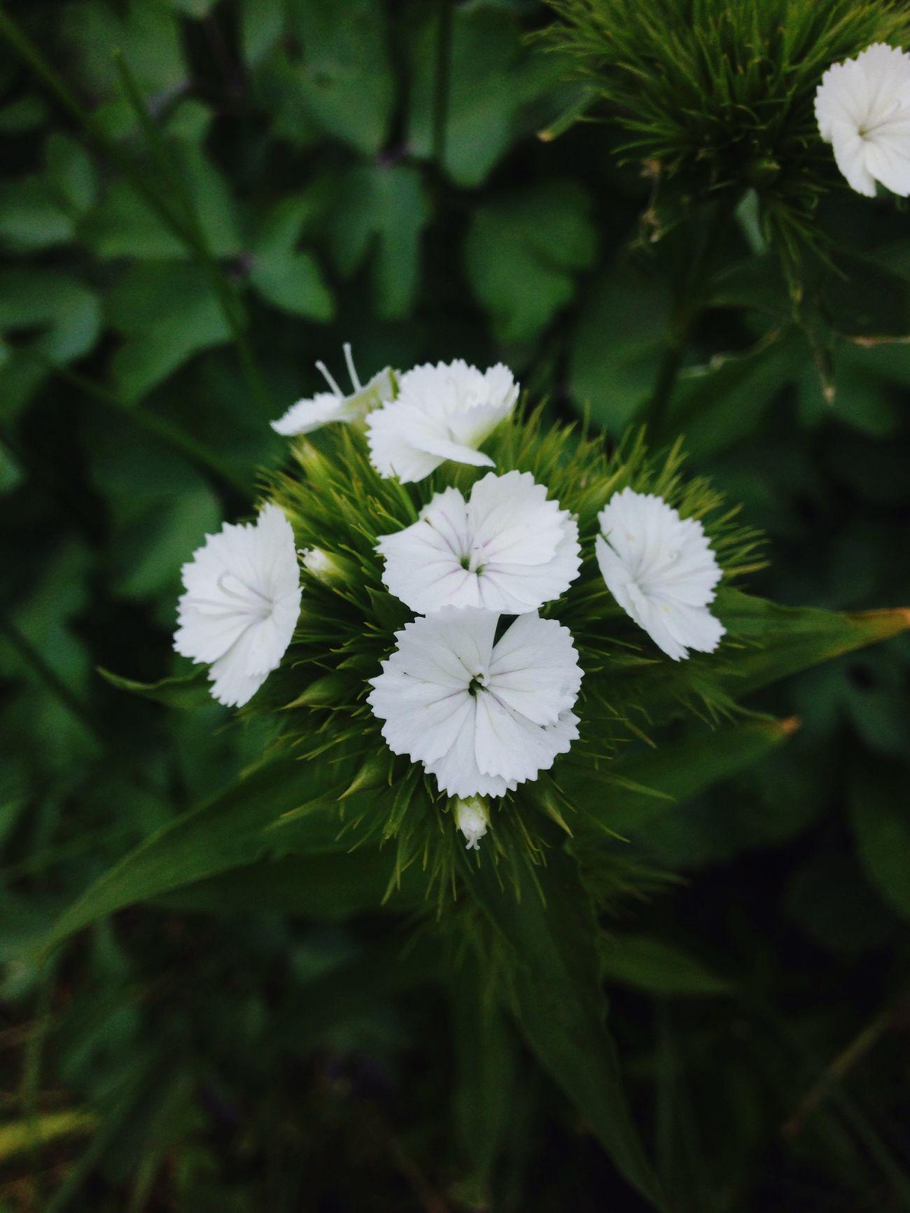 🌷 Flowers 🌹 Handmade Dacha