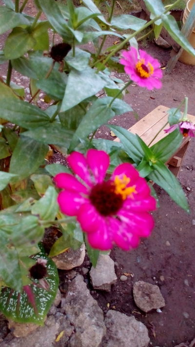 Flower Plant Fragility Nature Beauty In Nature Outdoors No People Close-up Leaf Freshness Flower Head Growth Day