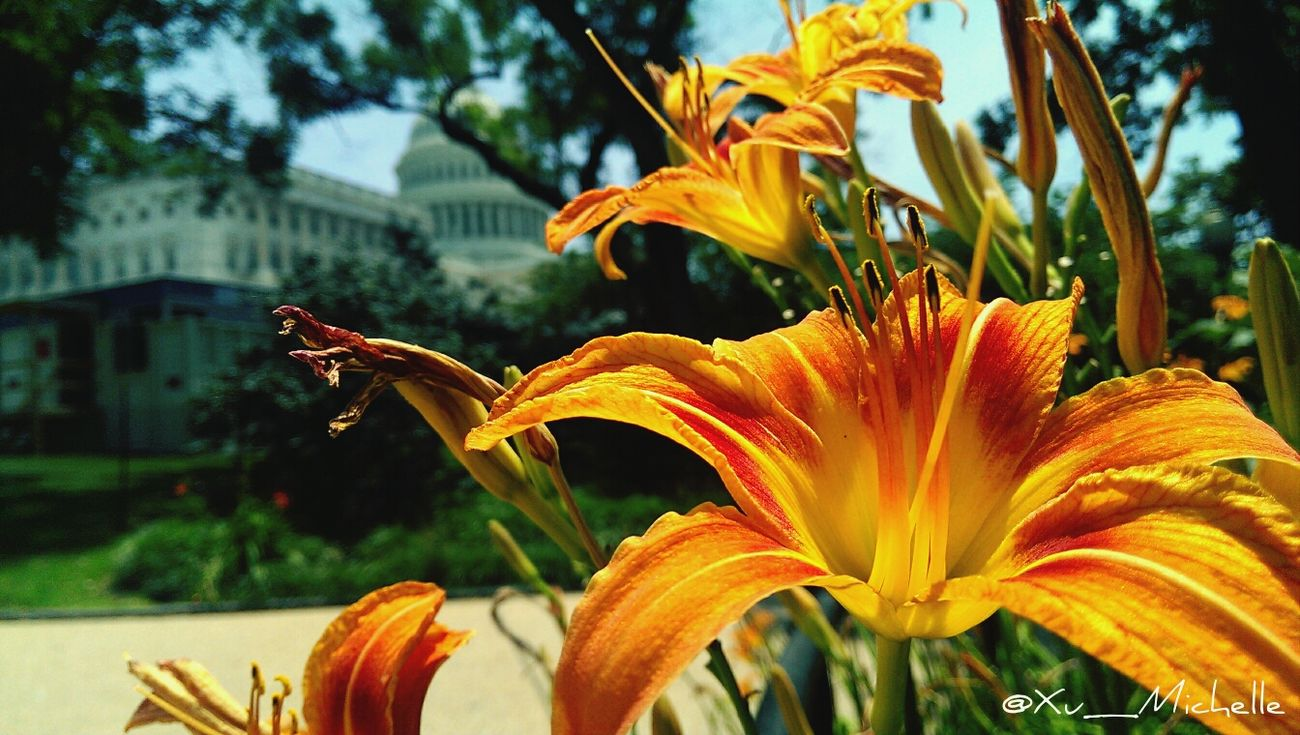 I spy, with my little eye, the capital building. Flower Porn Nature Architecture The Architect - 2014 EyeEm Awards