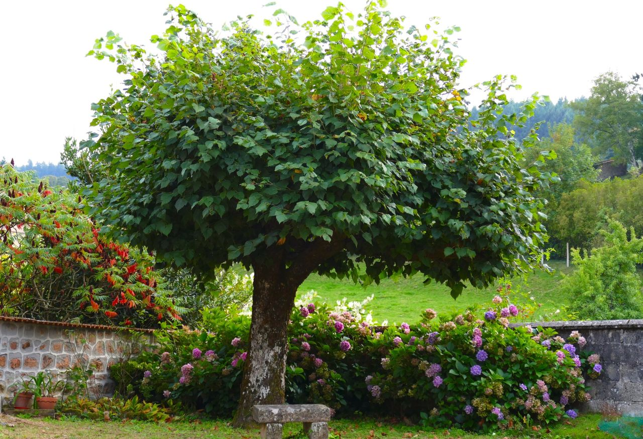 Beautiful stock photos of plant, Day, Flower, France, Garden