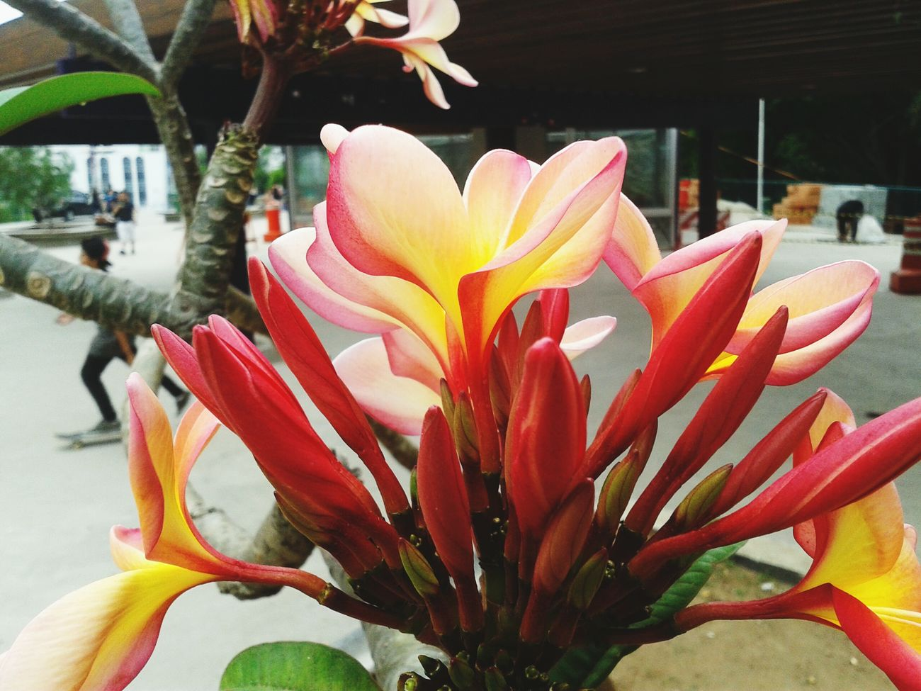 As cores me atraíram para uma flor tão despercebida Nature Flores Amoanatureza LoveNature