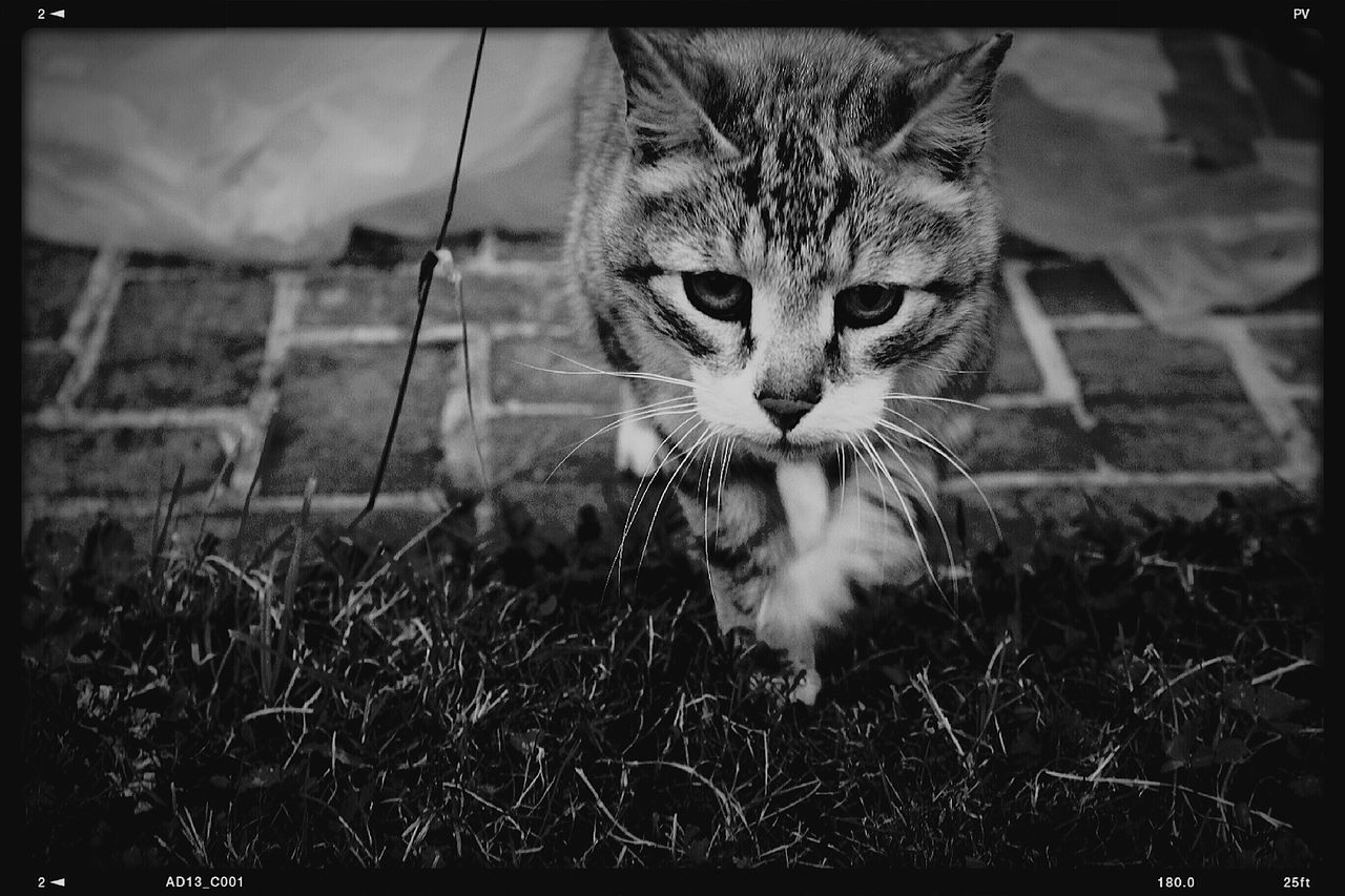 Cat Last Summer Black & White Monochrome Lisieux Normandie