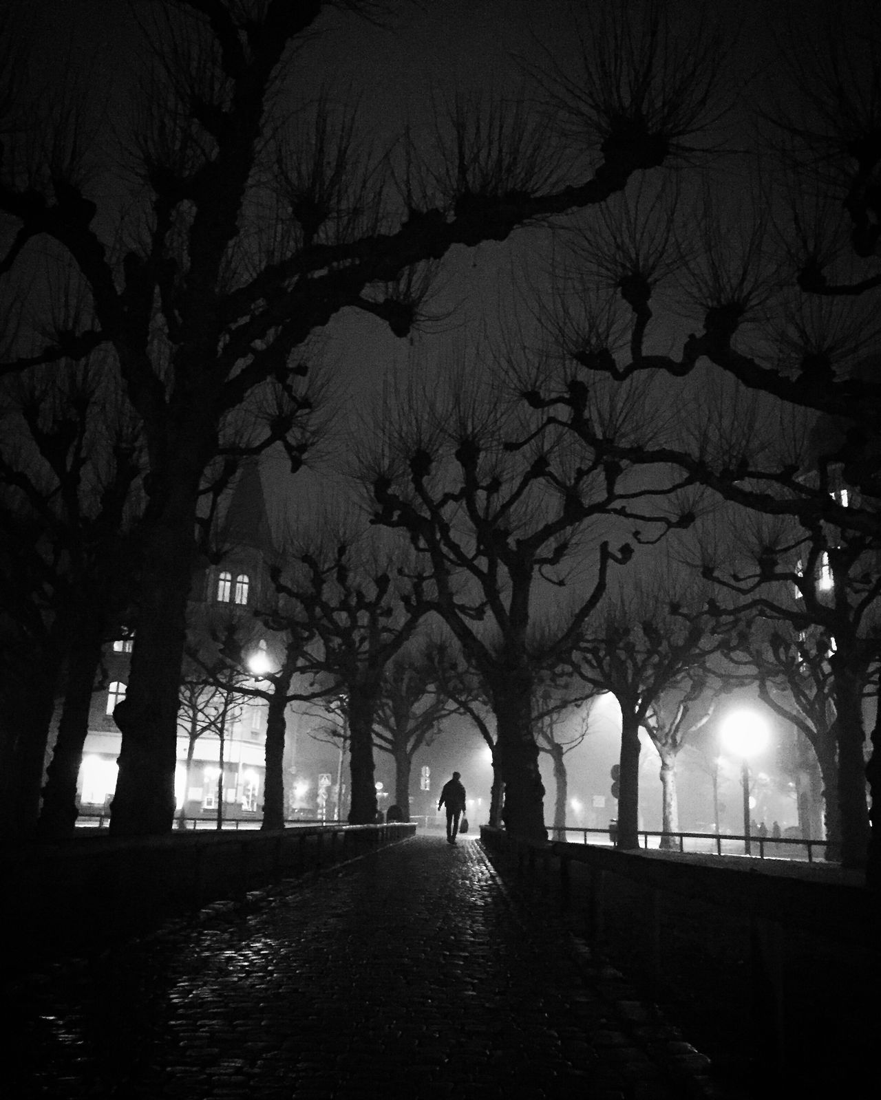 Tree Silhouette Winter Illuminated Darkness And Light EyeEm Best Shots - Black + White Monochrome Bw_collection Black And White Street Photography Shootermag
