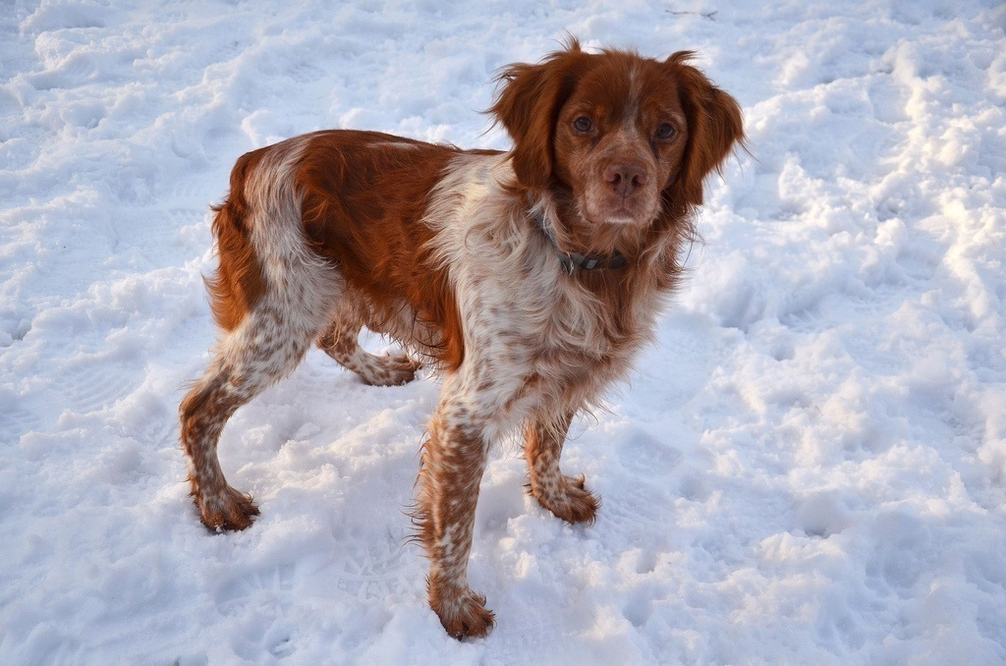 domestic animals, mammal, pets, dog, animal themes, one animal, brown, full length, pet collar, portrait, water, looking at camera, canine, day, outdoors, nature, sitting, weather, no people