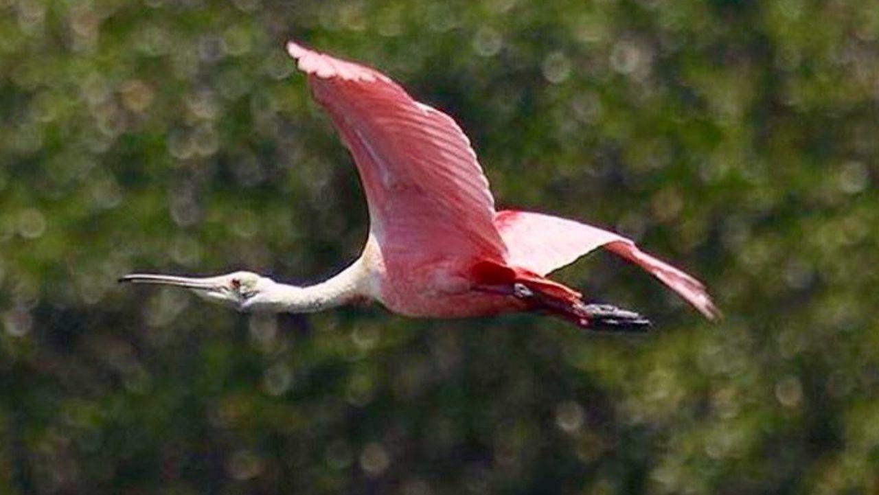 Animals Animals In The Wild Nature Photography Flying Nature Birds Of EyeEm  Birds