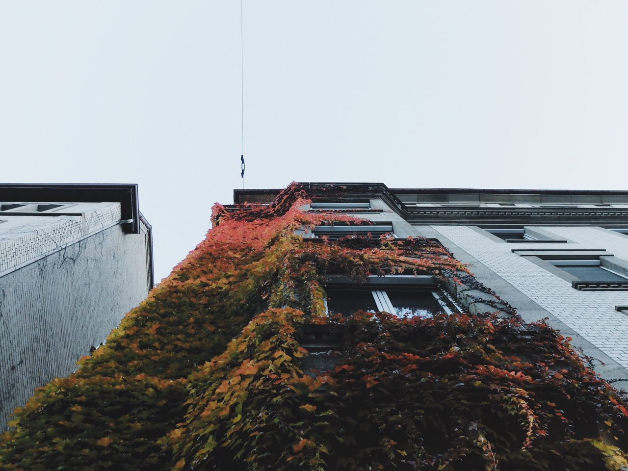 Autumn Autumn Colors Autumn Leaves Architecture Architecture_collection City Urban Geometry Urbanphotography Nature Nature_collection Showcase: November