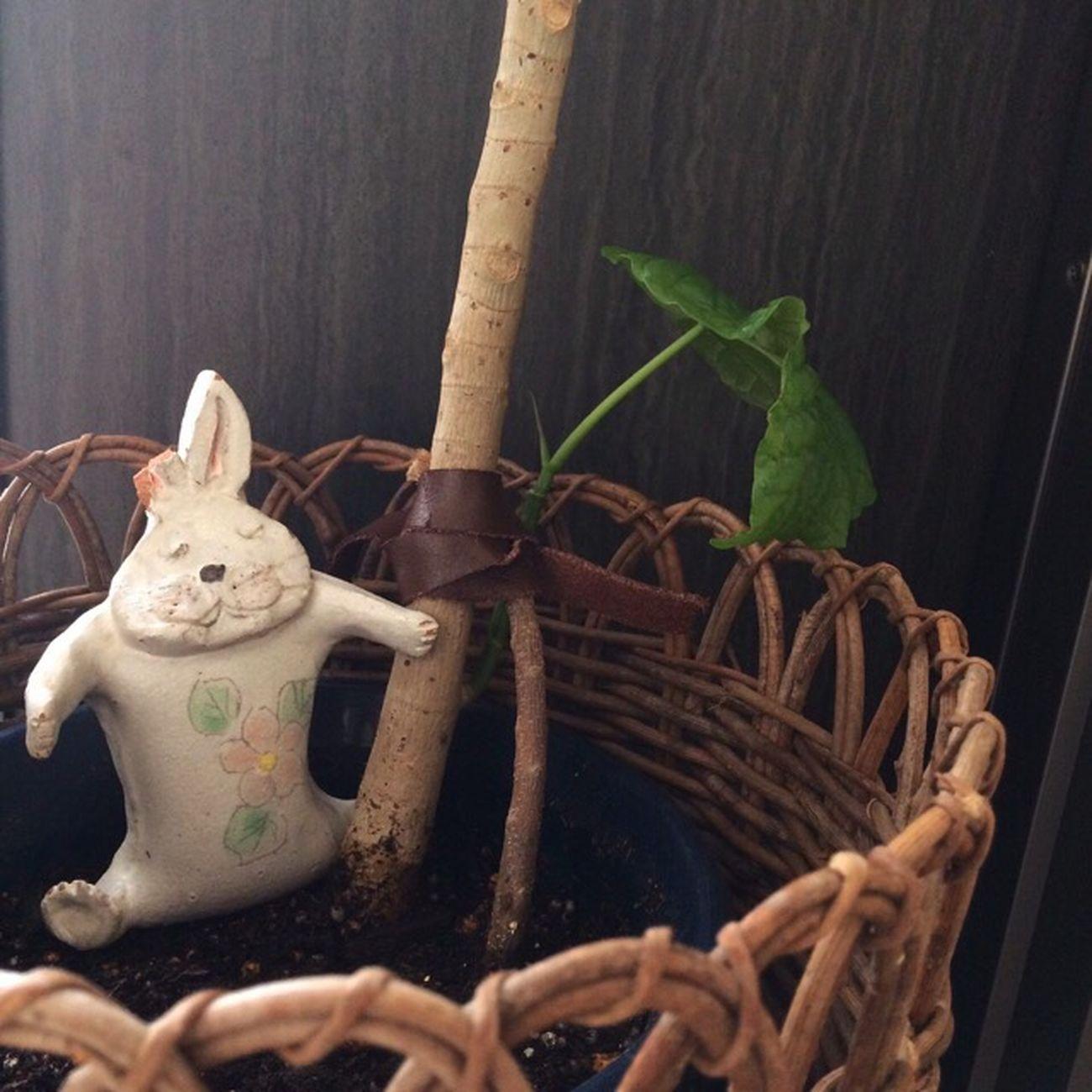 支える サポート 観葉植物 ガーデニング 応援