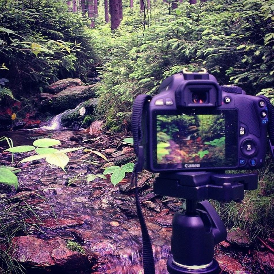 Naturfoto Forest Day Wood Canon