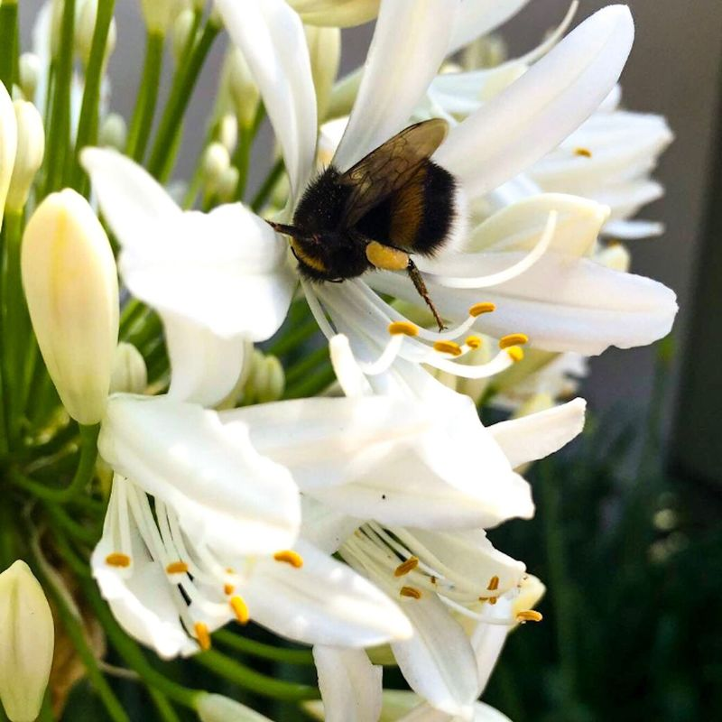 EyeEmNewHere Flower Nature Beauty In Nature Animal Themes Fragility One Animal Growth Insect Animals In The Wild Freshness Plant Close-up Day No People Petal Outdoors Pollination Blooming Flower Head EyeEmNewHere