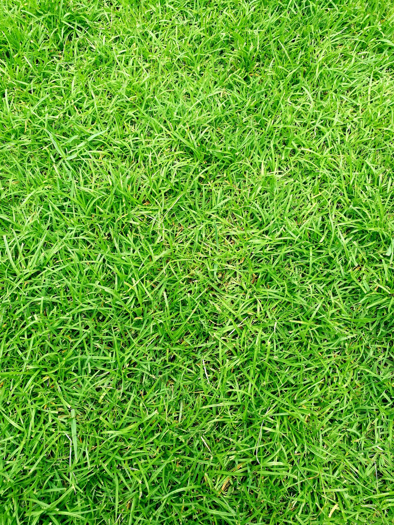 Green grass background. Green Grass Grass Grass Area Grass Photography Grass Field Grass Background Grass For Ground Relaxing Relaxing Time Nature Photography Naturephotography Nature_collection