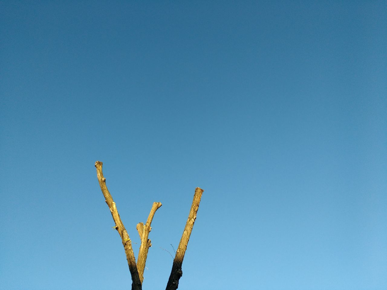 Blue Clear Sky Growth Plant No People Outdoors Tree Hugging A Tree Blue Sky Blue Minimalism Sunlit
