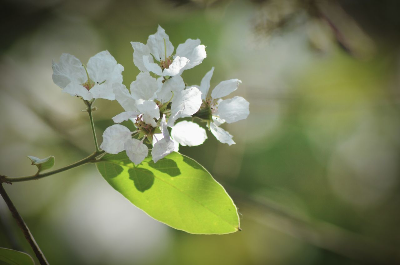 nature, flower, beauty in nature, growth, fragility, white color, day, no people, freshness, close-up, outdoors, tree, flower head