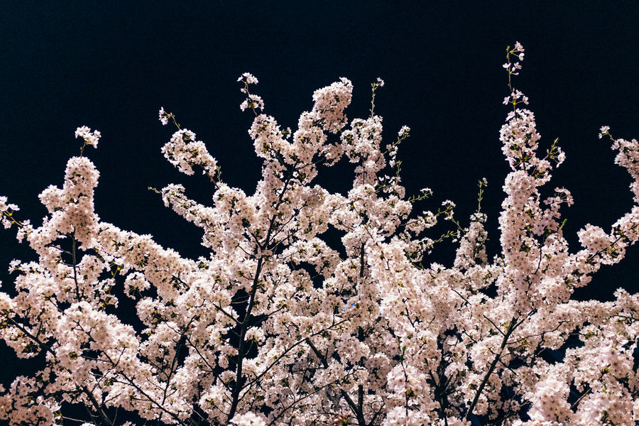 Beauty In Nature Blossom Branch Close-up Day Flower Fragility Freshness Growth Nature No People Outdoors Springtime Tree